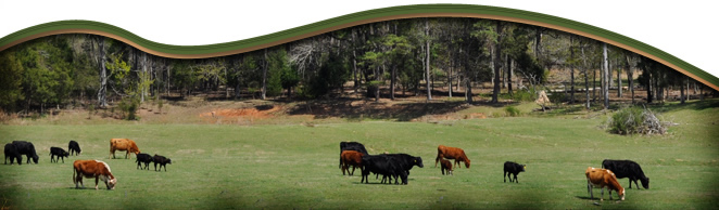 Natural Fed Angus Beef | History of Our Farm